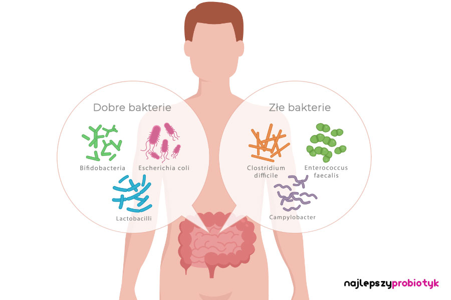 Mikroflora jelitowa