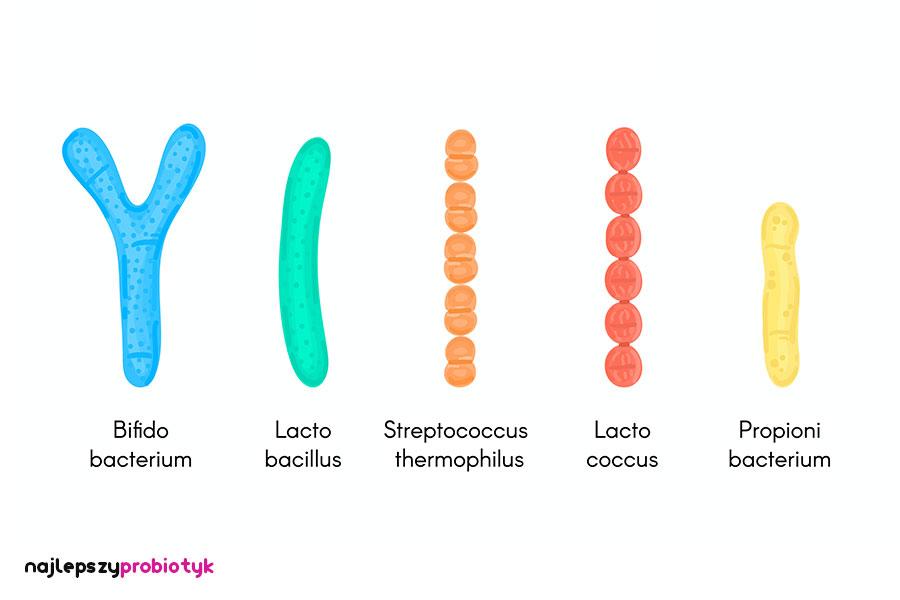 Najlepszy probiotyk